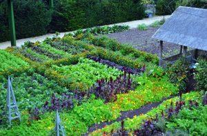 prednost organske proizvodnje 3