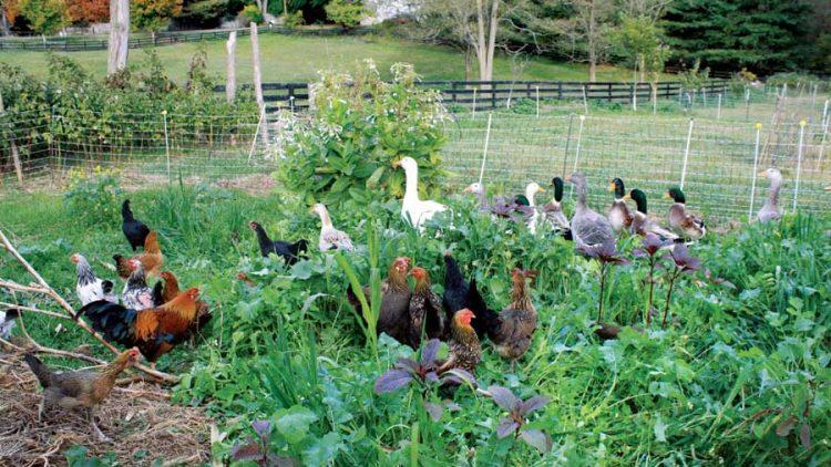 Moja bašta kao fabrika hrane