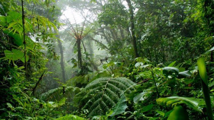Sve što mi je potrebno da znam naučila sam u šumi
