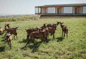 Izgrađena prva kuća od konoplje u Srbiji